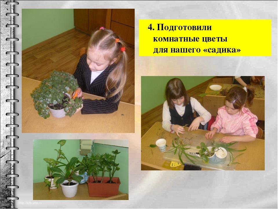 4. Подготовили комнатные цветы для нашего «садика»