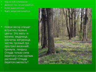Под густой голубизною Дремлет лес, не шелохнётся И,уже дыша весною , Ждёт, ко