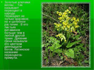 Золотые ключики весны… Так называют первоцвет в народе. Первоцвет не только к