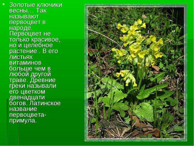 Золотые ключики весны… Так называют первоцвет в народе. Первоцвет не только к...