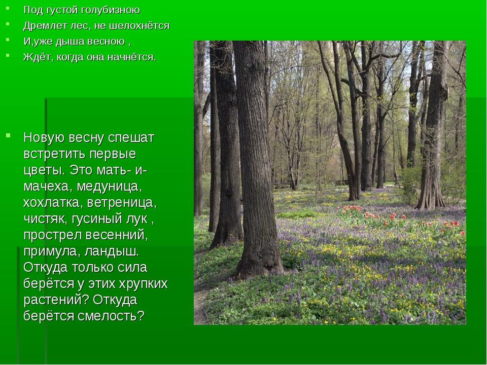 Под густой голубизною Дремлет лес, не шелохнётся И,уже дыша весною , Ждёт, ко...