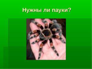 Нужны ли пауки?