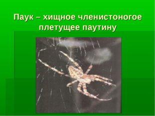 Паук – хищное членистоногое плетущее паутину