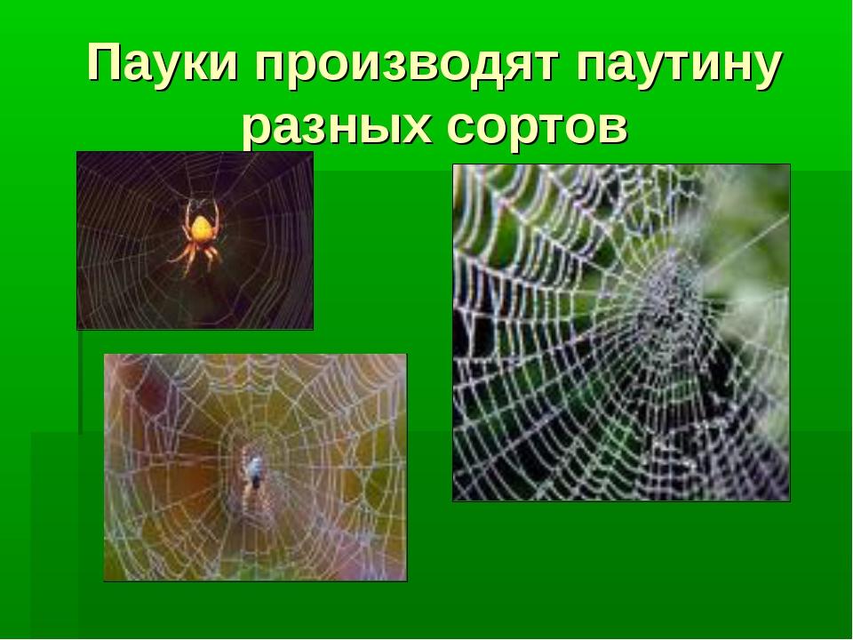Пауки производят паутину разных сортов