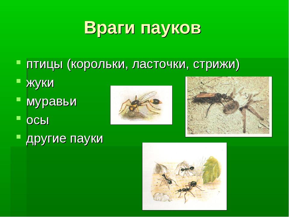 Враги пауков птицы (корольки, ласточки, стрижи) жуки муравьи осы другие пауки