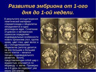 Развитие эмбриона от 1-ого дня до 1-ой недели. В результате оплодотворения ге