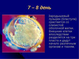 7 – 8 день Зародышевый пузырек (бластула) срастается со слизистой оболочкой м