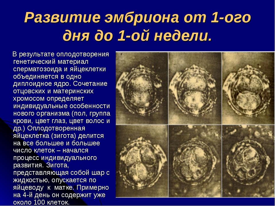 Развитие эмбриона от 1-ого дня до 1-ой недели. В результате оплодотворения ге...
