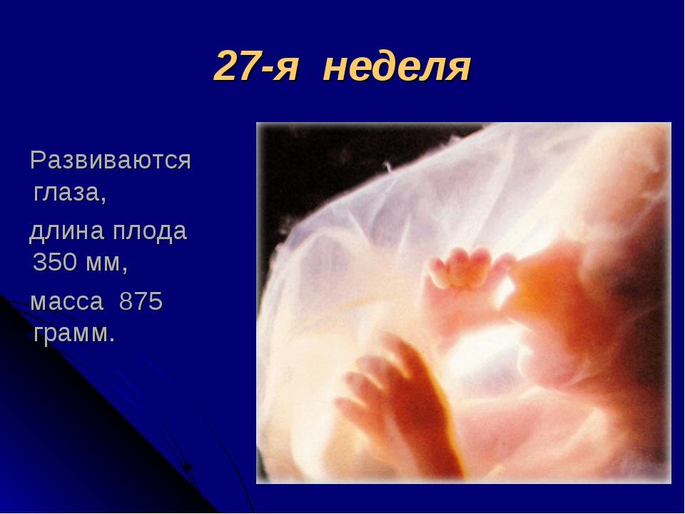 27-я неделя Развиваются глаза, длина плода 350 мм, масса 875 грамм.