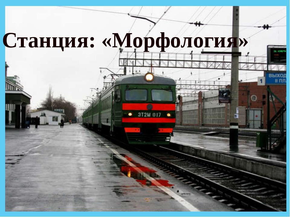 Станция: «Морфология»