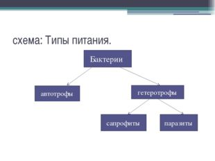 схема: Типы питания. бактерии автотрофы гетеротрофы Бактерии сапрофиты паразиты