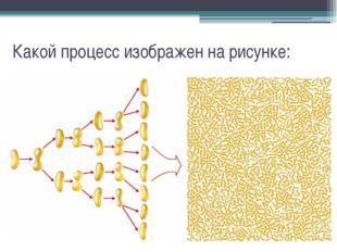 Какой процесс изображен на рисунке: