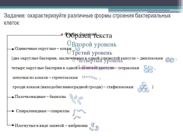 Задание: охарактеризуйте различные формы строения бактериальных клеток
