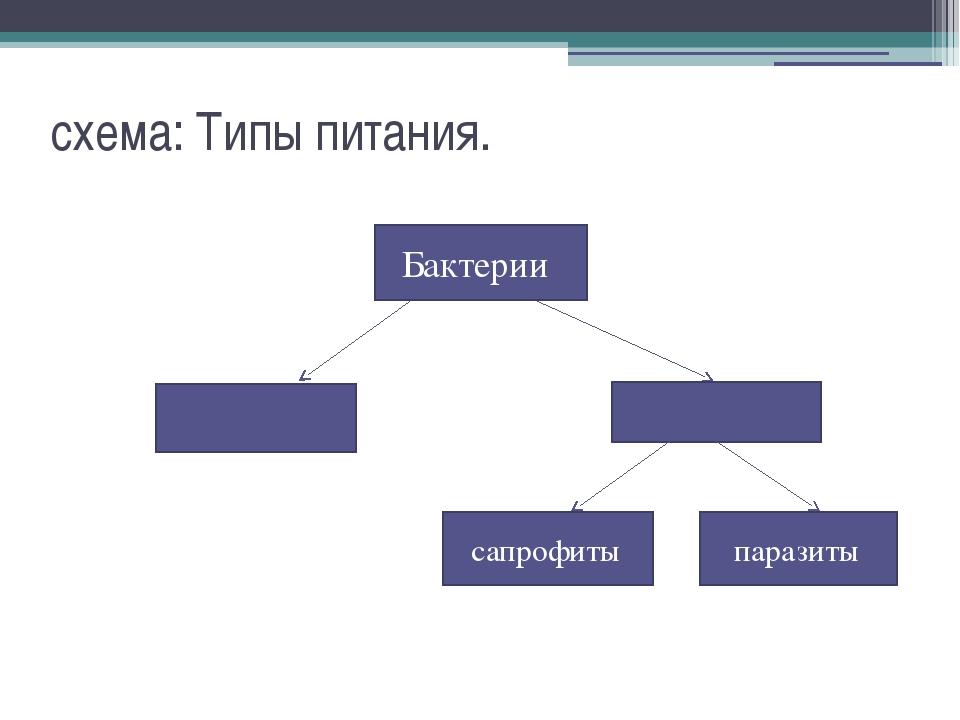 схема: Типы питания. бактерии Бактерии сапрофиты паразиты