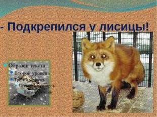 - Подкрепился у лисицы!