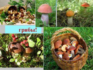 грибы! Это грибы!