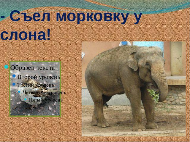 - Съел морковку у слона!