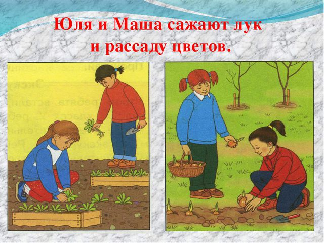 Юля и Маша сажают лук и рассаду цветов.