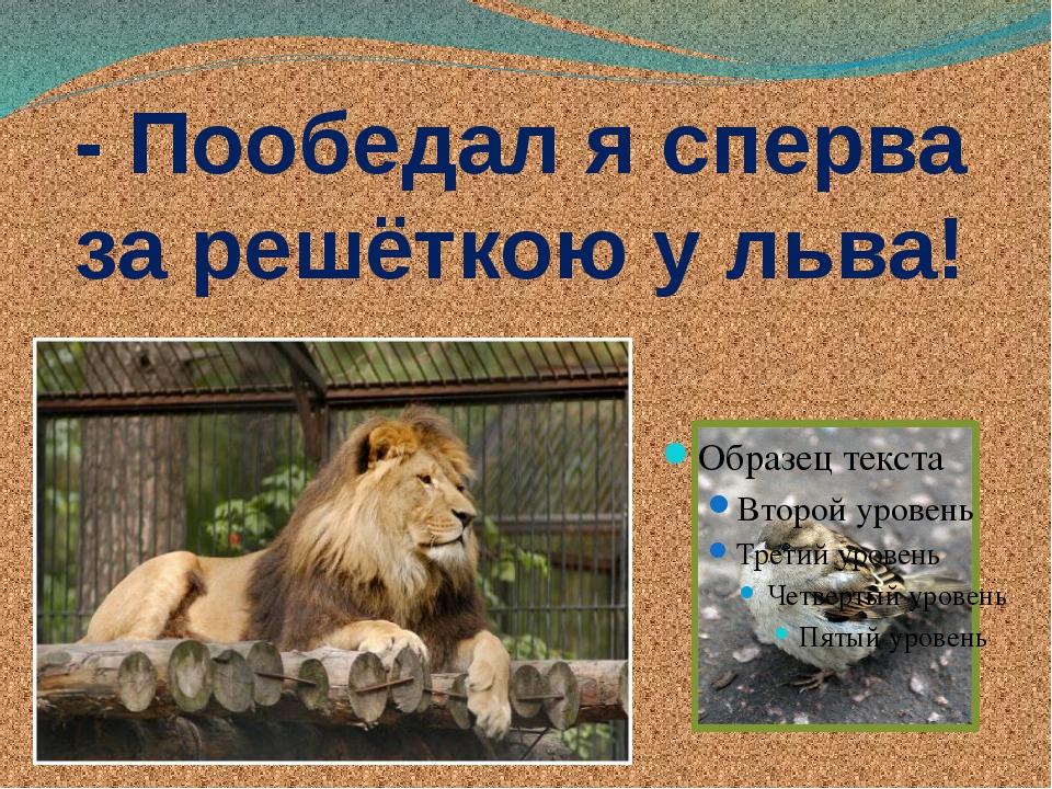 - Пообедал я сперва за решёткою у льва!