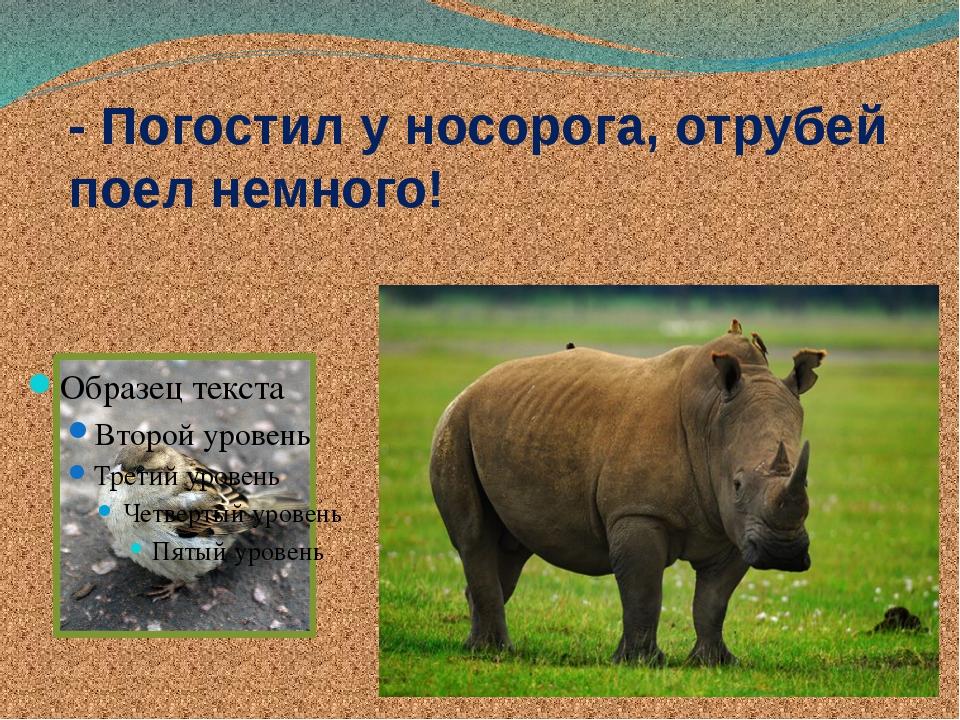 - Погостил у носорога, отрубей поел немного!