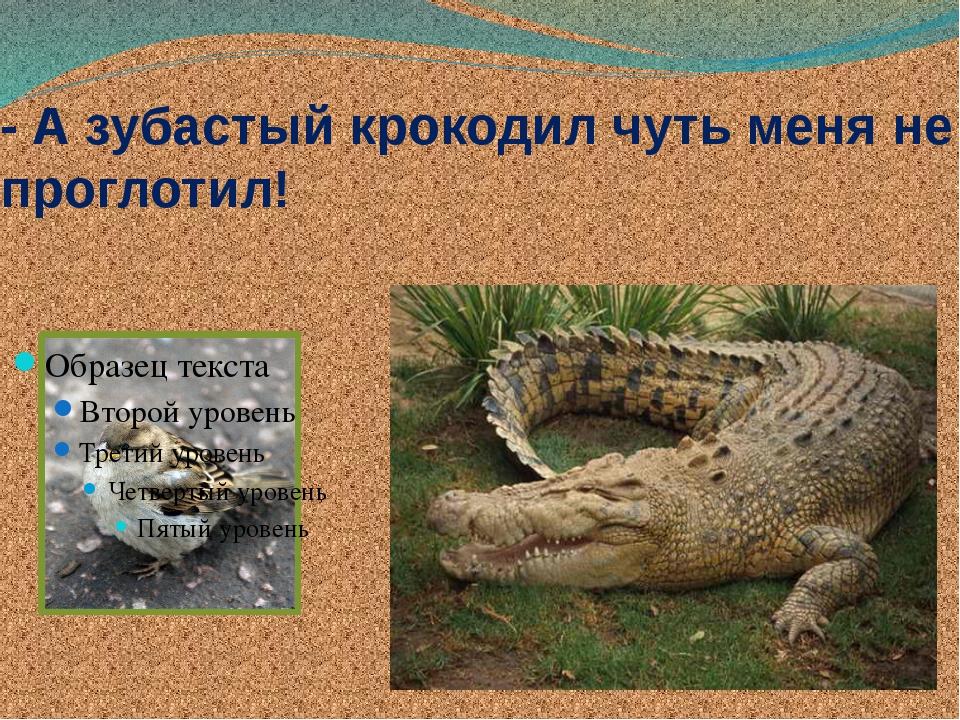 - А зубастый крокодил чуть меня не проглотил!