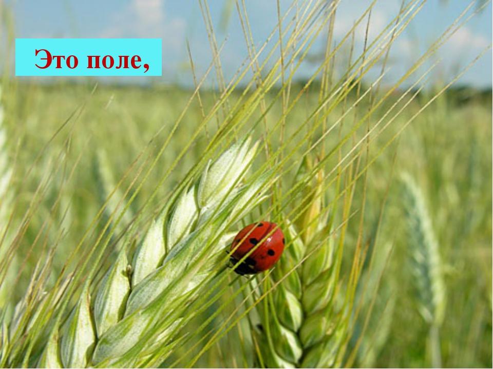 Это поле,