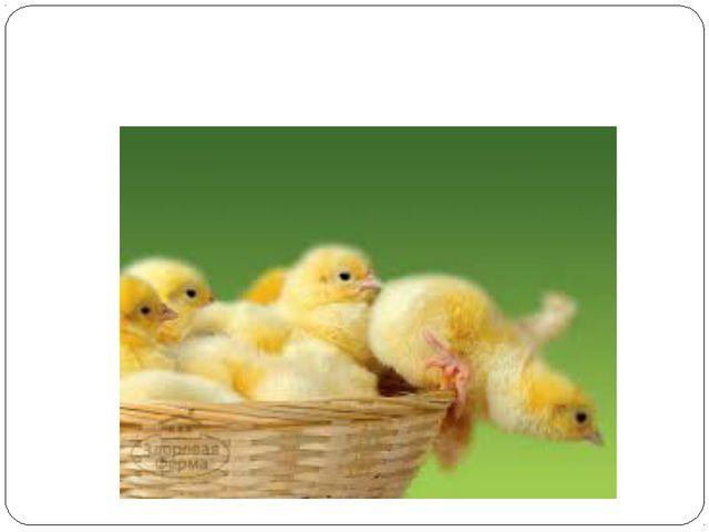 Во сколько раз 18 цыплятбольше чем 2 цыпленка?