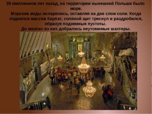 20 миллионов лет назад, на территории нынешней Польши было море. Морские воды