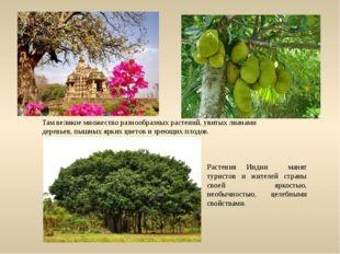 Растения Индии манят туристов и жителей страны своей яркостью, необычностью,