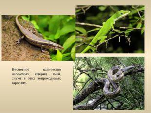 Несметное количество насекомых, ящериц, змей, снуют в этих непроходимых зарос