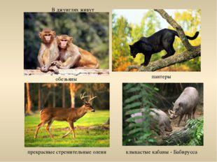клыкастые кабаны - Бабирусса В джунглях живут обезьяны пантеры прекрасные стр