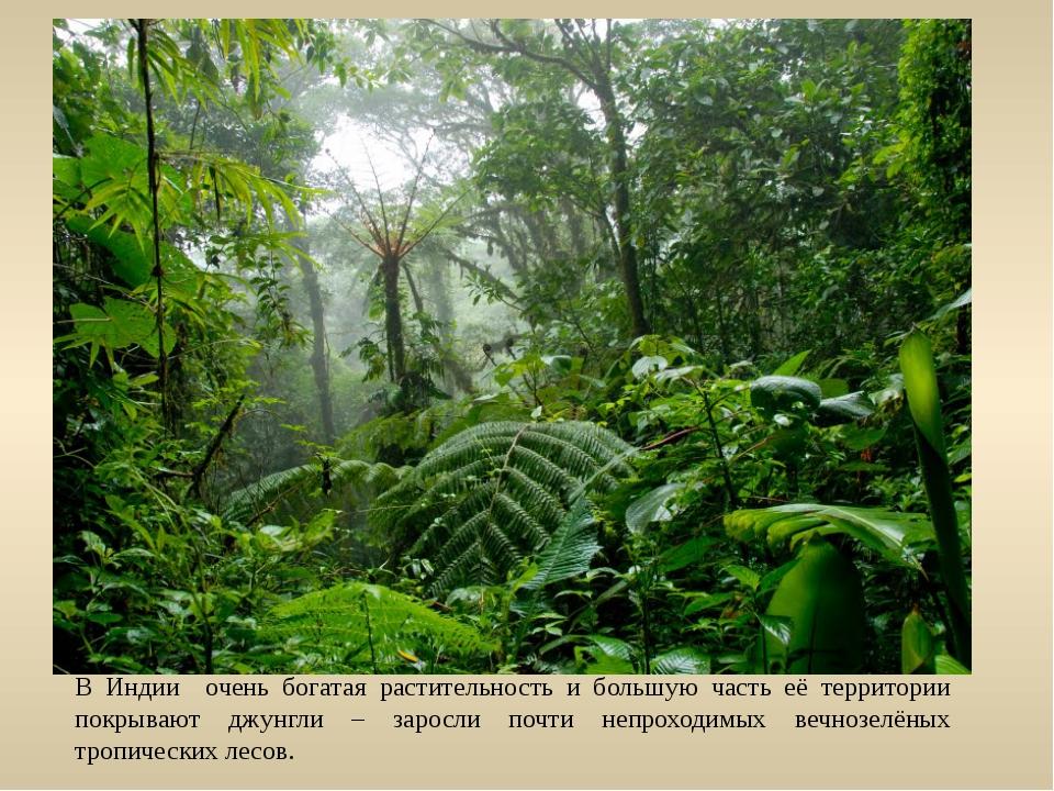 В Индии очень богатая растительность и большую часть её территории покрывают...