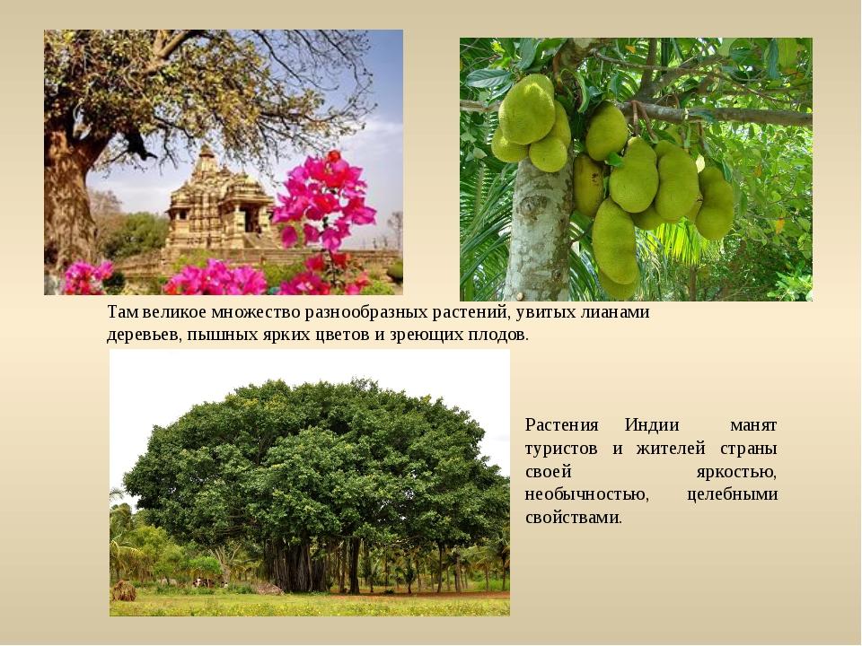 Растения Индии манят туристов и жителей страны своей яркостью, необычностью,...