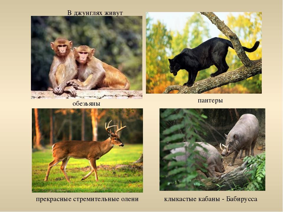клыкастые кабаны - Бабирусса В джунглях живут обезьяны пантеры прекрасные стр...