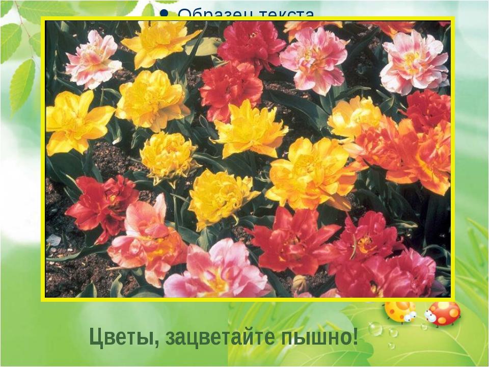 . . . Цветы, зацветайте пышно!