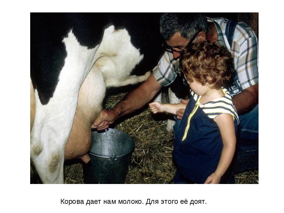 Корова дает нам молоко. Для этого её доят.