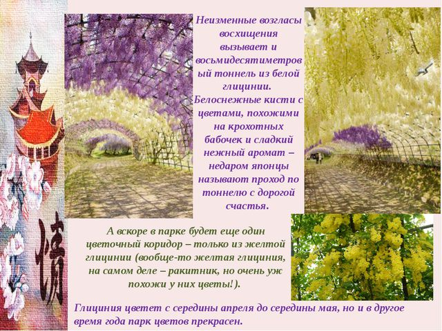 Неизменные возгласы восхищения вызывает и восьмидесятиметровый тоннель из бел...