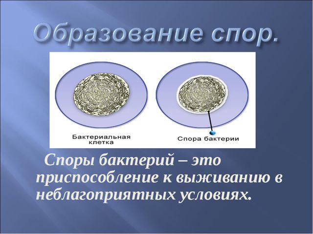 Споры бактерий – это приспособление к выживанию в неблагоприятных условиях.
