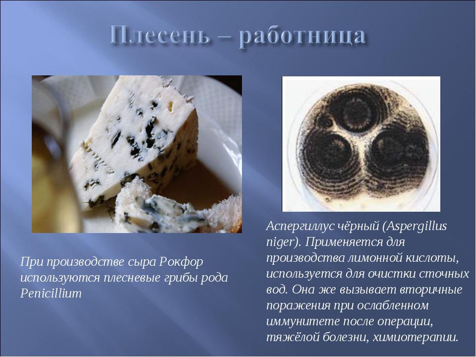 При производстве сыра Рокфор используются плесневые грибы рода Penicillium Ас...