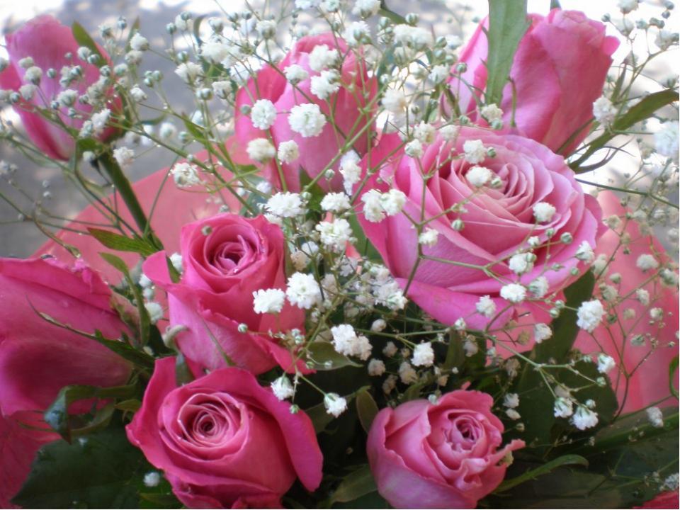 Скопировать цветов