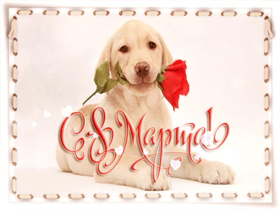Открытки, открытки на 8 марта подруге с собаками
