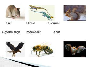 a rat a lizard a squirrel a golden eagle honey-beer a bat
