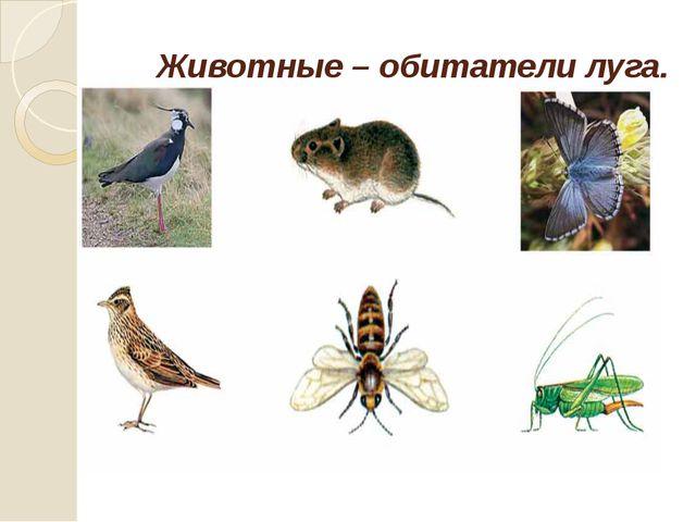 Животные – обитатели луга.