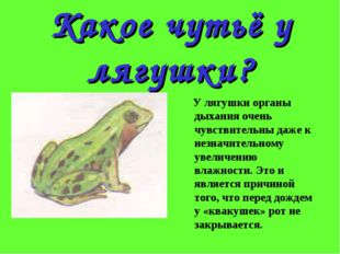 Какое чутьё у лягушки? У лягушки органы дыхания очень чувствительны даже к не