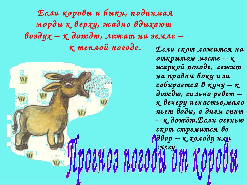 Если коровы и быки, поднимая морды к верху, жадно вдыхают воздух – к дождю, л...