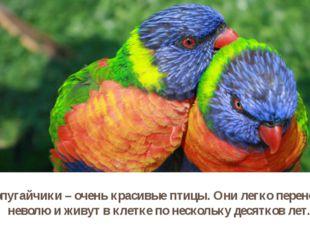 Попугайчики – очень красивые птицы. Они легко переносят неволю и живут в клет