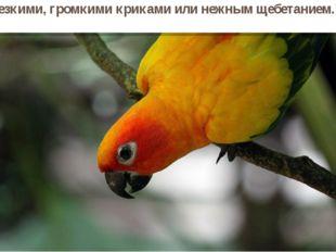 Всего известно более 300видов попугаев. Попугаи общаются резкими, громкими кр