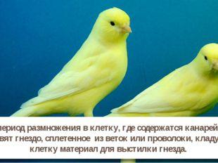 В период размножения в клетку, где содержатся канарейки ставят гнездо, сплете