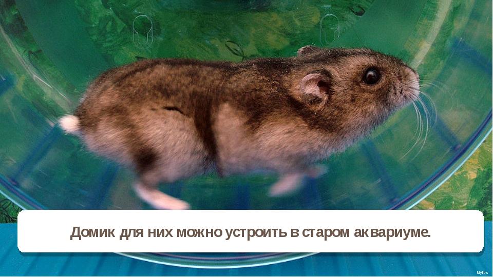 Mylius Домик для них можно устроить в старом аквариуме.