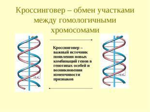 Кроссинговер – обмен участками между гомологичными хромосомами Кроссинговер –